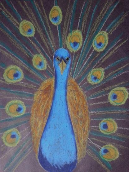 Jufeline Prachtige Pauw